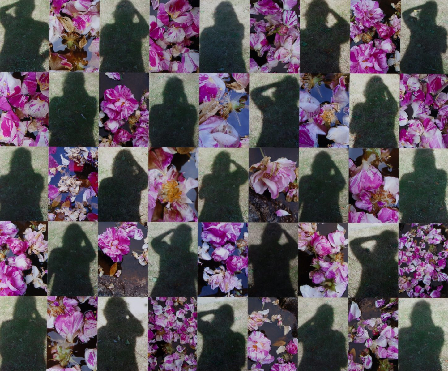 Shadows and Rosa Mundi